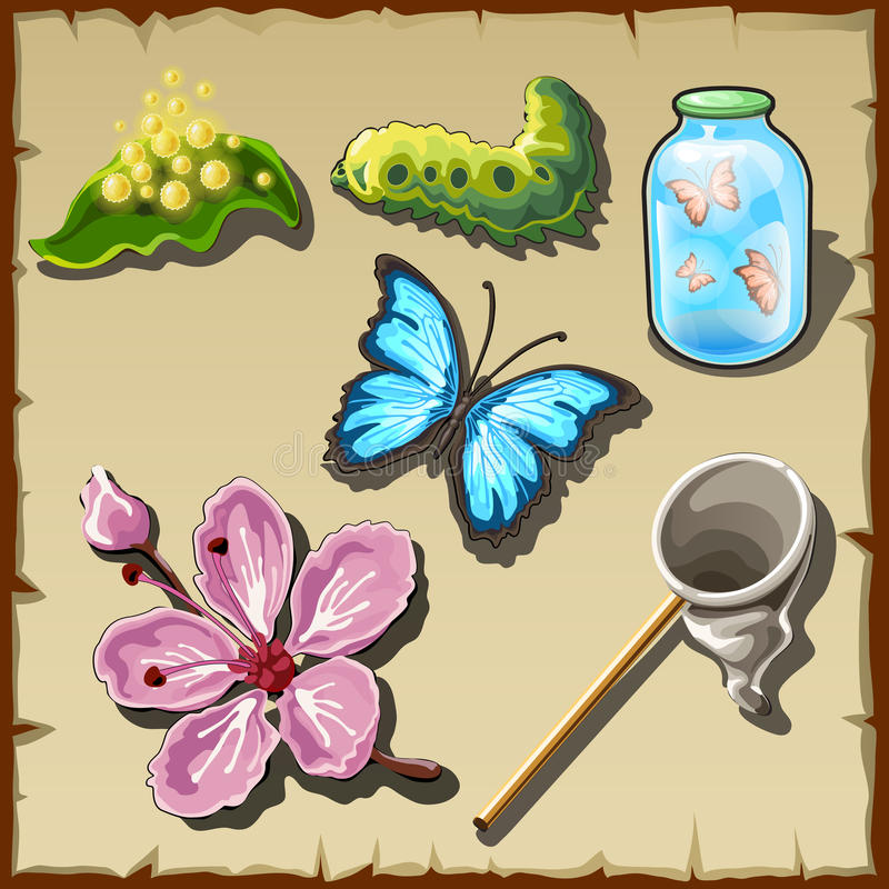 Etapas de la vida de una mariposa en exhausto, sistema de ilustración del vector