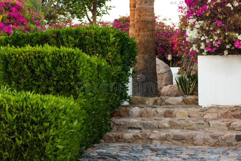 Etapas de pedra naturais e trajeto que ajardinam no jardim verde imagens de stock royalty free