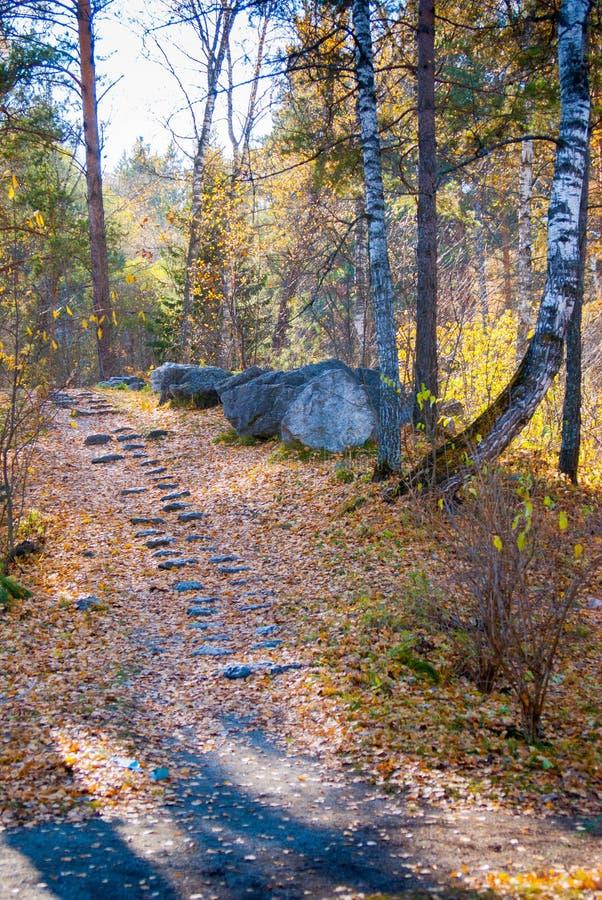 Etapas de pedra no parque público do outono fotos de stock