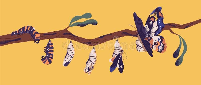 Etapas del desarrollo de la mariposa - larva de la oruga, crisálidas, imago Ciclo de vida, metamorfosis o proceso de la transform stock de ilustración