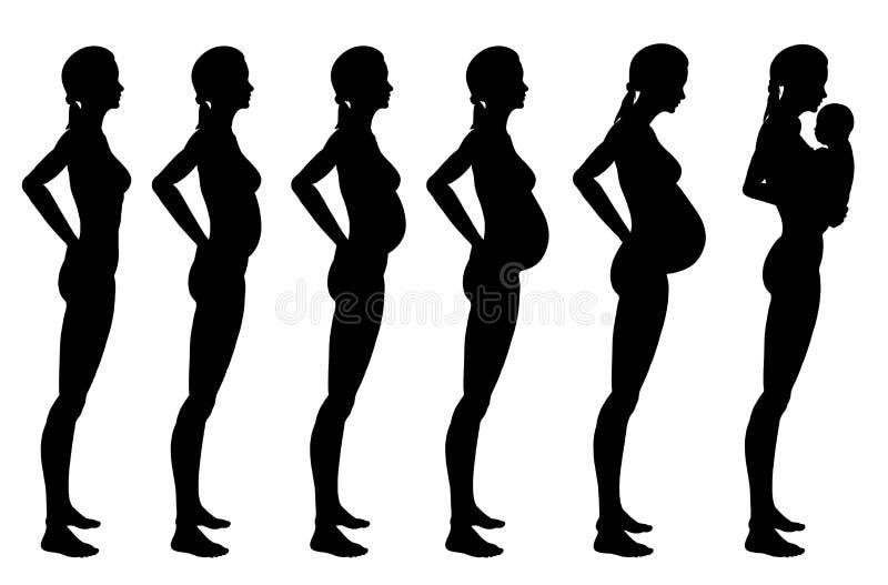 Etapas del embarazo de la mujer ilustración del vector