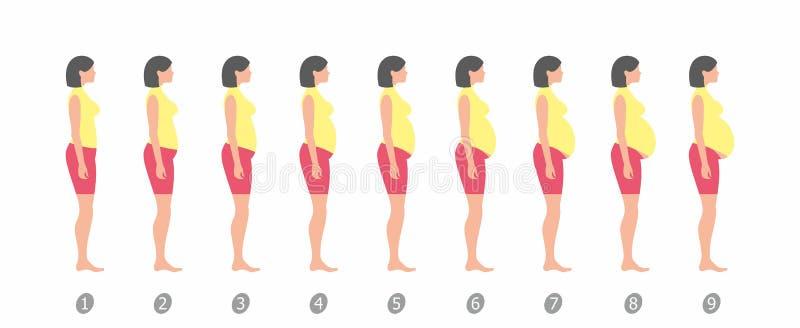 Etapas del embarazo Diseño plano stock de ilustración