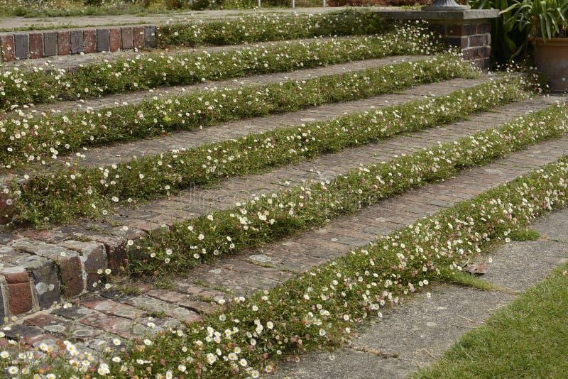 Etapas no jardim inglês do país foto de stock