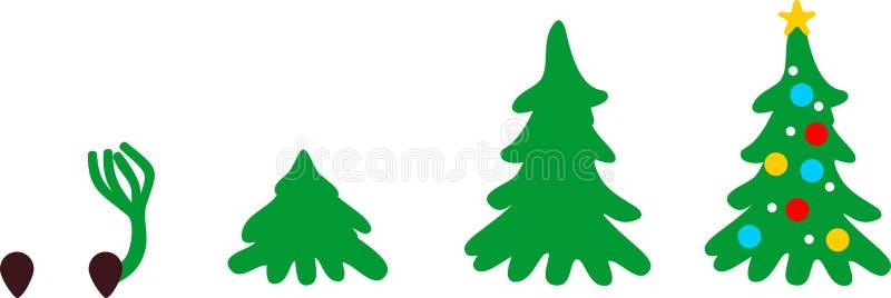 Etapper av tillväxt av granen från kärnar ur till julgranen vektor illustrationer
