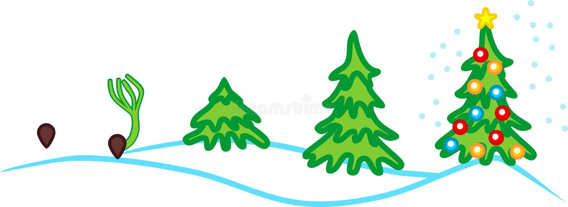 Etapper av tillväxt av granen från kärnar ur till julgranen med leksaker vektor illustrationer