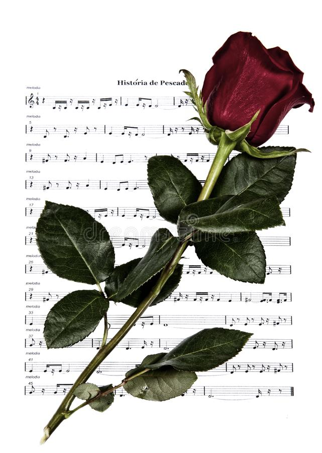 Eternal romantic music. Old sheet music isolated on white background with red rose on top royalty free stock images