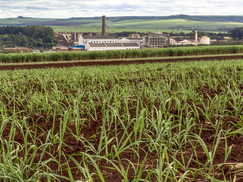 ethanol imagem de stock royalty free