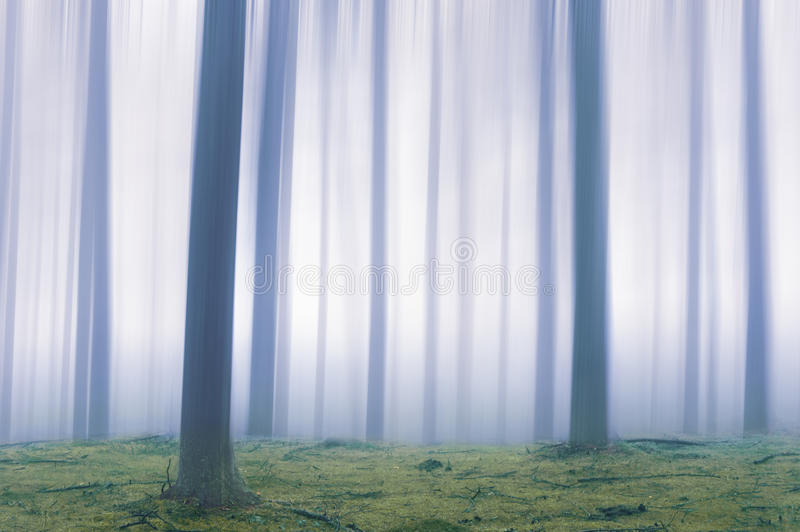 Etherisch bos stock foto's