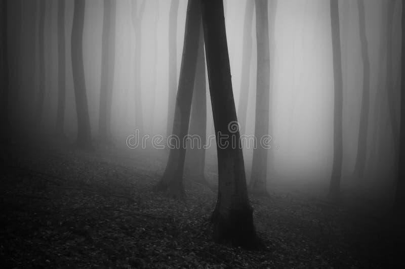 Etherisch donker bos met mist stock foto