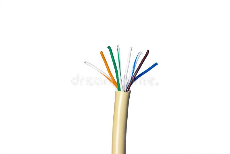 Ethernetkabel för ett lokalt nätverk på vit royaltyfri fotografi