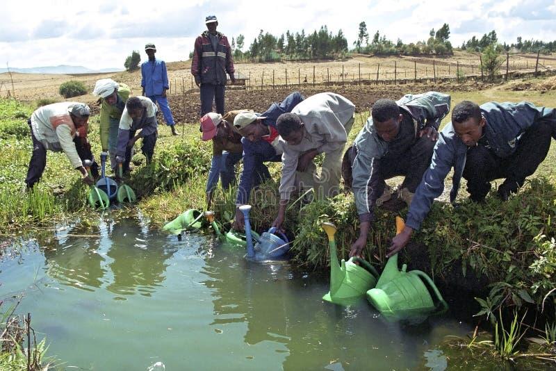 Ethiopiërs die in boomkwekerij samenwerken stock afbeeldingen