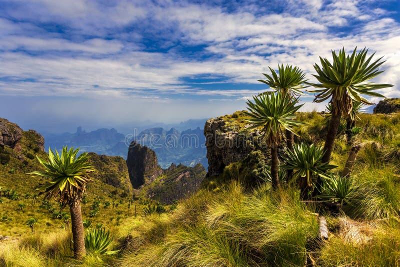 ethiopia góry simien fotografia stock
