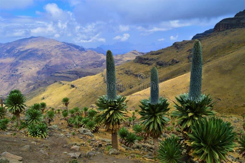 ethiopia Resa till och med de Simien bergen arkivbilder