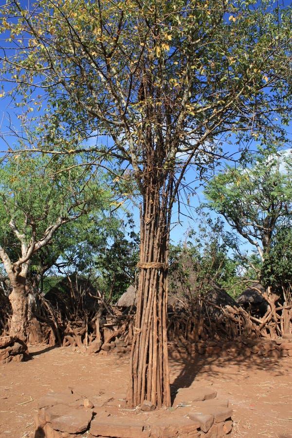 ethiopia treeby fotografering för bildbyråer