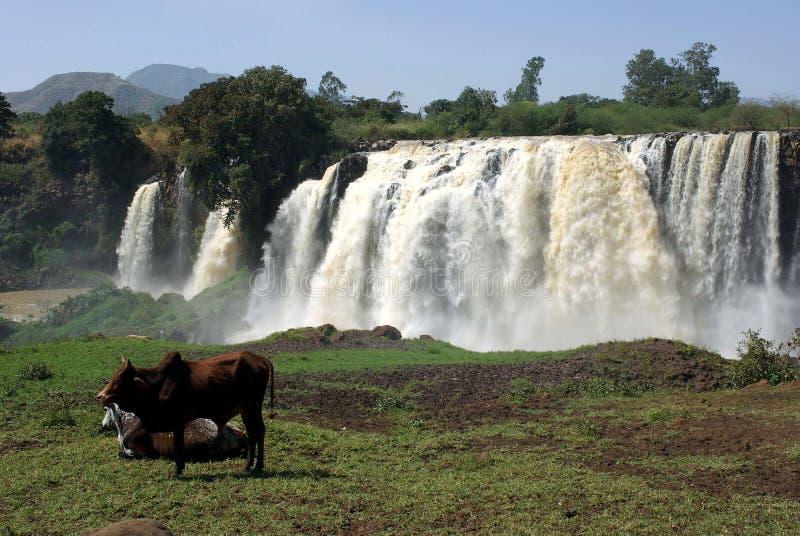 ethiopia vattenfall royaltyfria foton