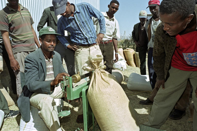 Ethiopian farmers sell grain to grain purchaser. Ethiopia, Oromiya District, Debre Zeit City: Oromo, largest Ethiopian ethnic group, men, small farmers have gone royalty free stock photo