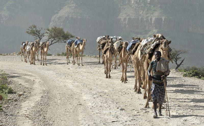 ethiopian husvagn för 2 kamel royaltyfria foton