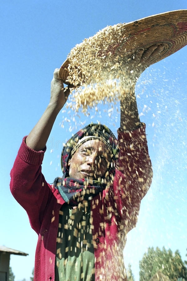Ethiopian woman separate chaff from the grain. Ethiopia, Sululta district, Chancho Gaba Robi village, Oromo woman, largest Ethiopian ethnic population group, is stock photos