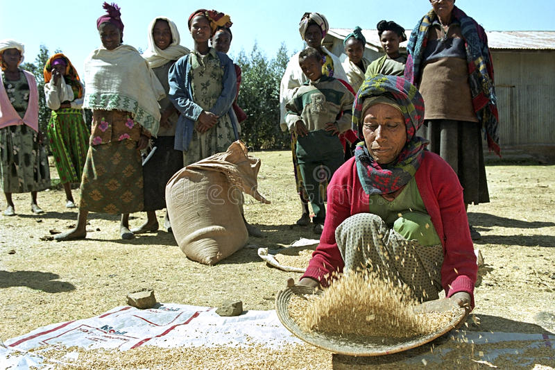 Ethiopian woman separate chaff from the grain. Ethiopia, Sululta district, Chancho Gaba Robi village, Oromo woman, largest Ethiopian ethnic population group, is stock images