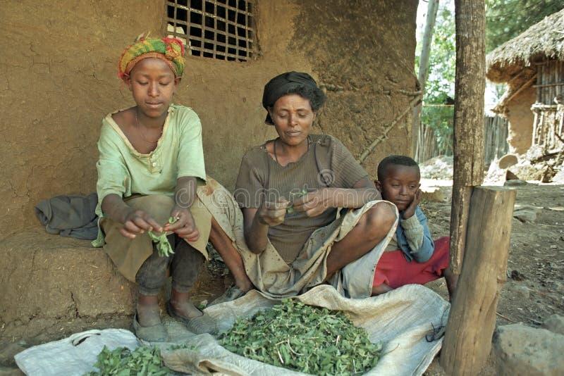 Ethiopische de moeder en het meisjes schone kruiden van het dorpsleven royalty-vrije stock afbeeldingen
