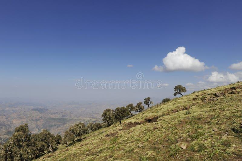 Ethiopische geladas stock foto's