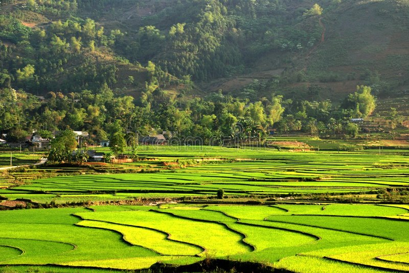 Ethnic minority village in the terrace field stock images