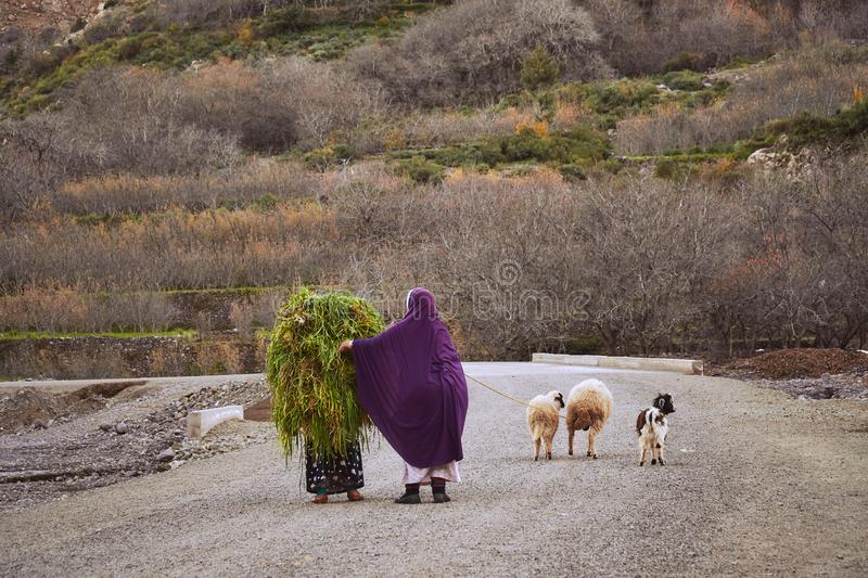 Ethnic moroccan women carrying the grass on the road royalty free stock images
