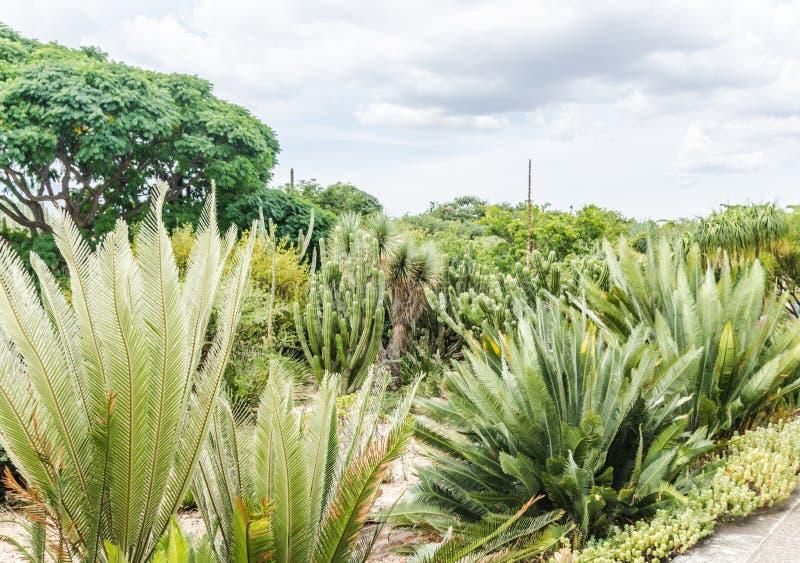 Ethnobotanic garden in Oaxaca Mexico royalty free stock photos