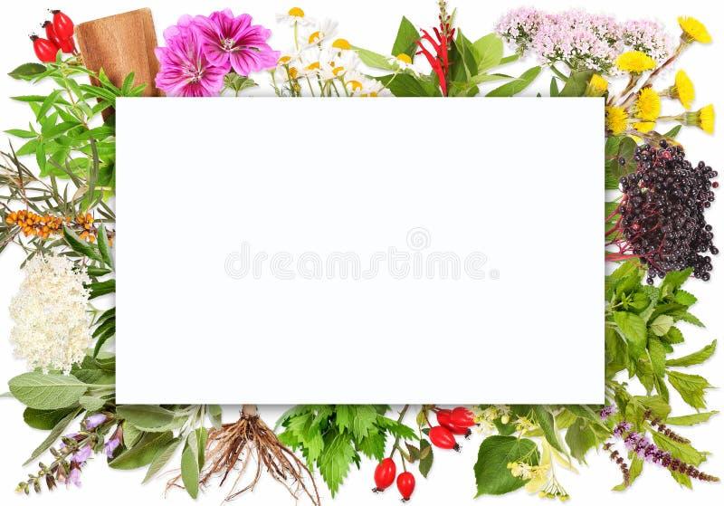 Etichetta in bianco con le piante di tè fotografie stock