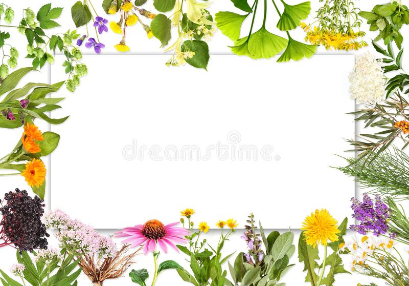 Etichetta in bianco con le piante medicinali 2 fotografia stock