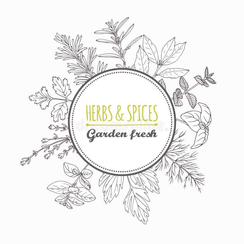 Etichetta del cerchio con le erbe e le spezie disegnate a mano Condimenti di stile del profilo illustrazione di stock