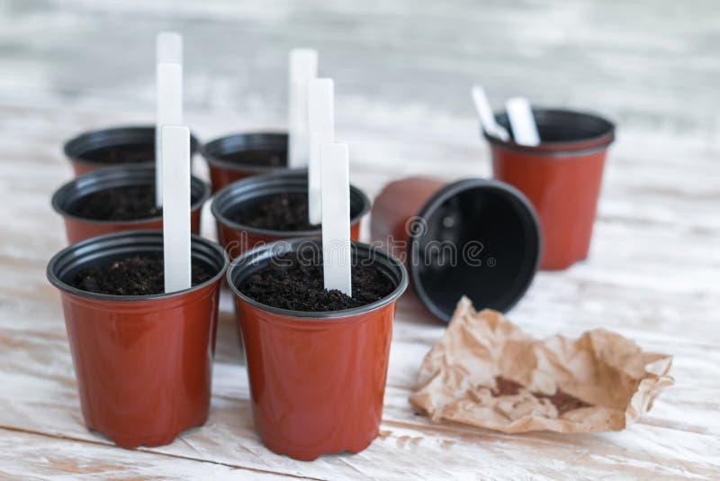 Etichette bianche in vasi e semi marroni su fondo di legno bianco fotografia stock libera da diritti