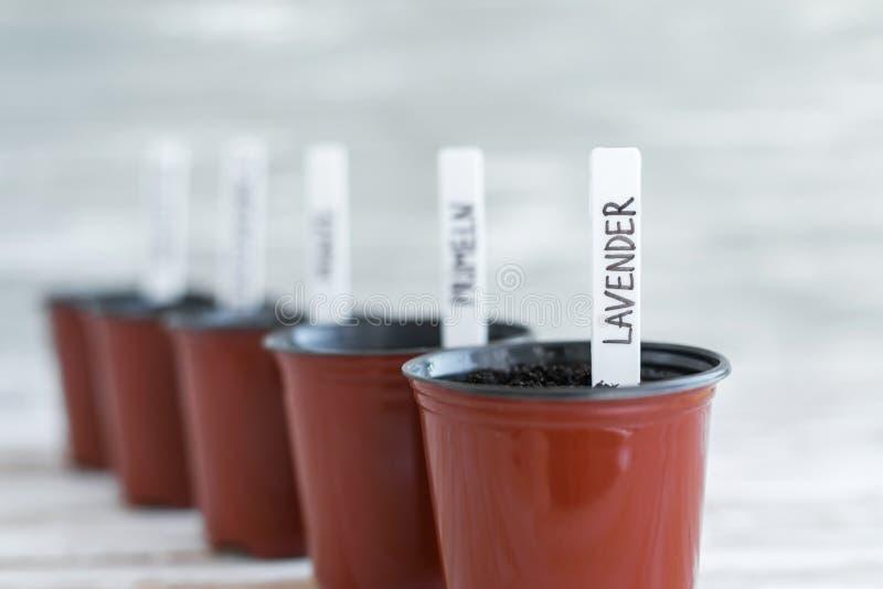 Etichette bianche in vasi marroni Piante in vaso su fondo di legno bianco immagine stock