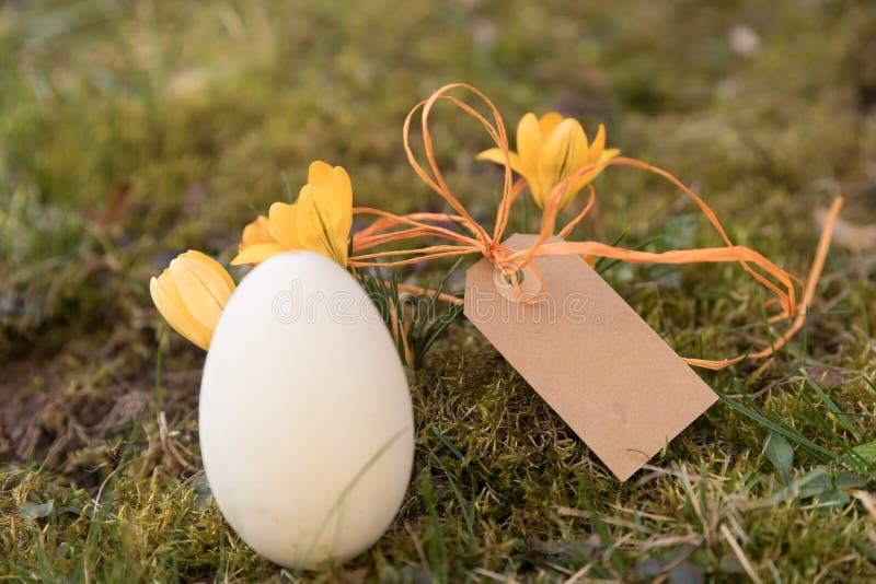 Etikett med ett easter ägg och krokusar arkivbild
