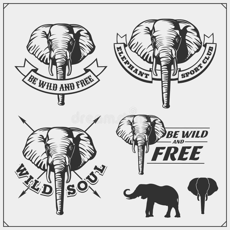 Etiketten, emblemen en ontwerpelementen voor sportclub met olifant stock illustratie