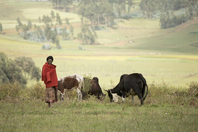 Etiopisk lantgårdkvinna royaltyfri bild