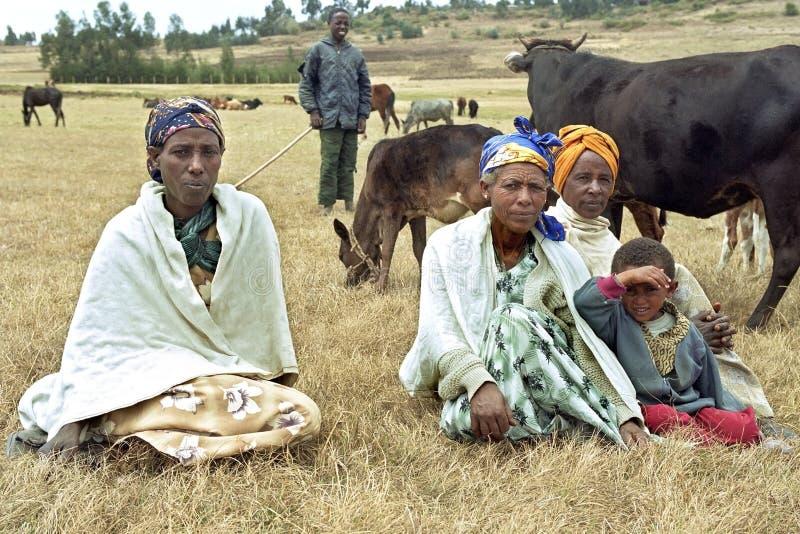 Etiopiska kvinnor och tonåriga samlas kor royaltyfria foton