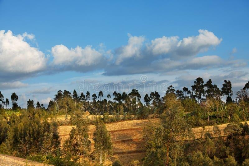 Etiopiska landskap fotografering för bildbyråer
