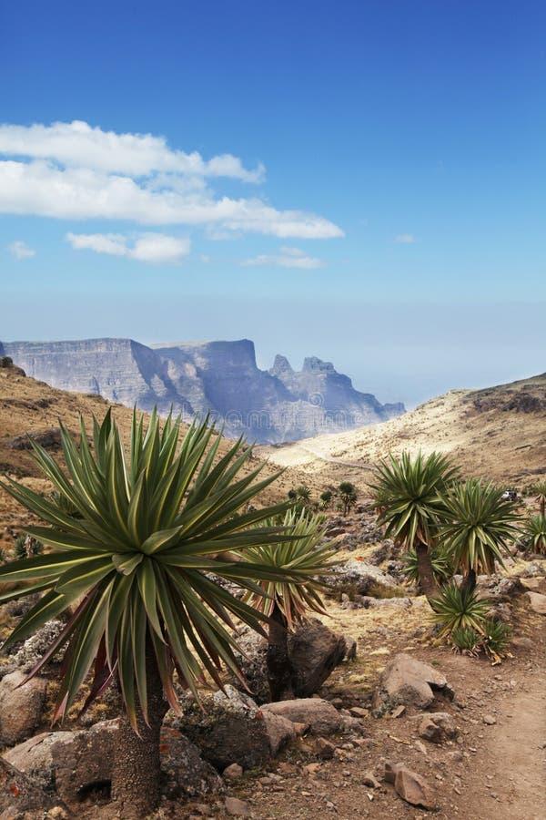 Etiopiska landskap arkivfoton