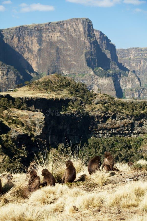 Etiopiska landskap royaltyfria bilder