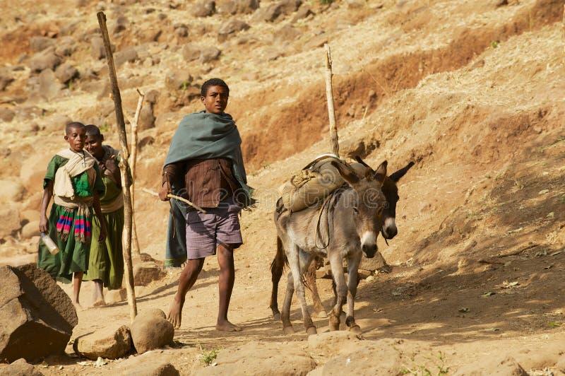 Etiopscy ludzie chodzą bosego wsi ścieżką z osłami ładującymi z workami w Bahir Dar, Etiopia zdjęcie stock