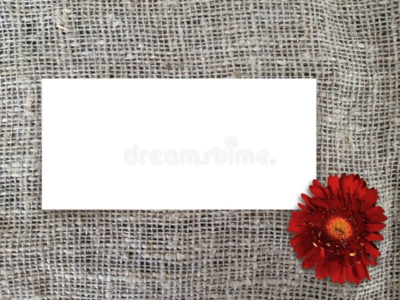 Etiqueta de papel en blanco con el gerbera rojo de la margarita en fondo del saco foto de archivo