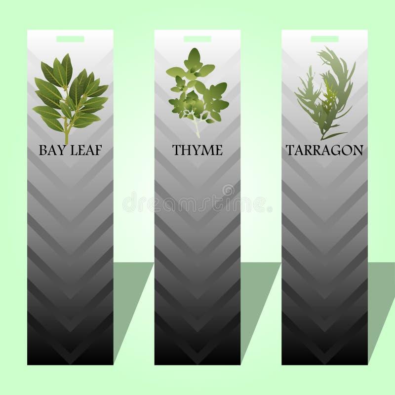 Etiqueta longa com ervas picantes ilustração royalty free