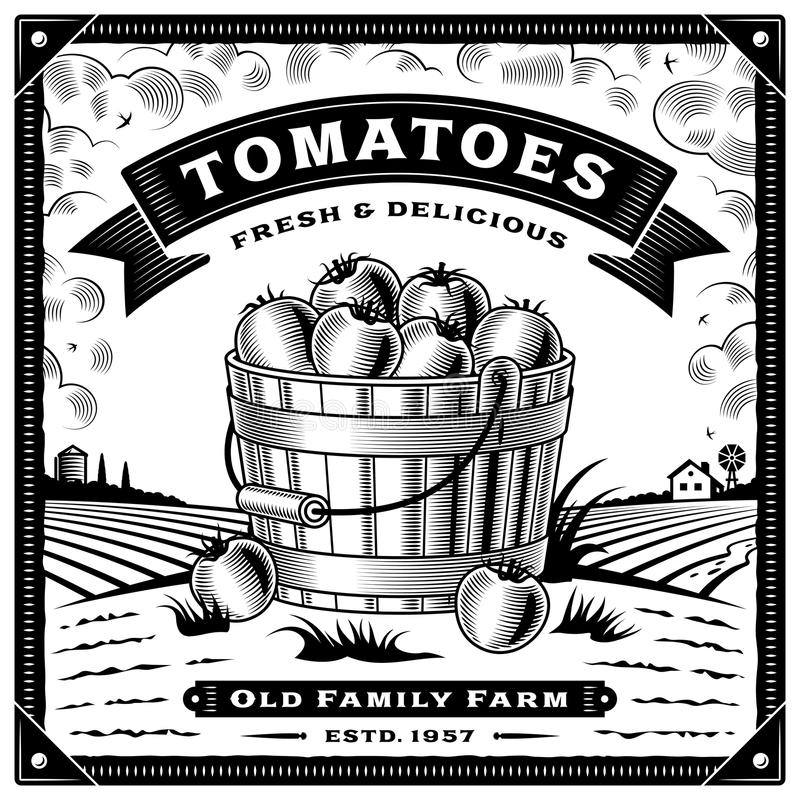Etiqueta retro da colheita do tomate com a paisagem preto e branco ilustração do vetor