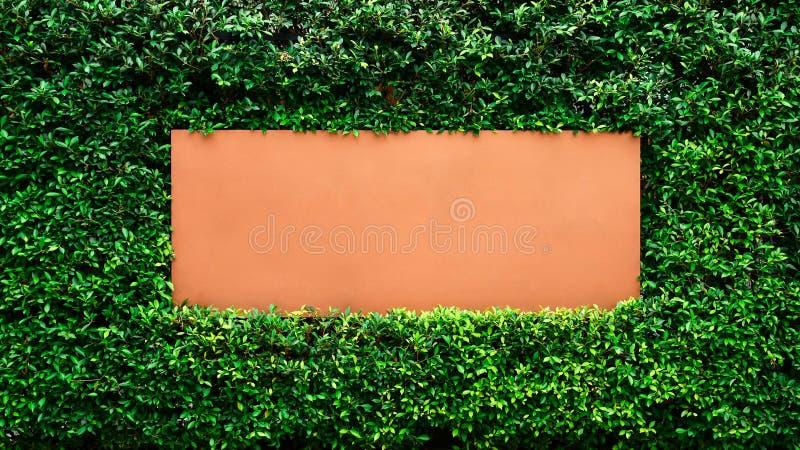 Etiqueta vacía de Brown en la pared del árbol imagenes de archivo