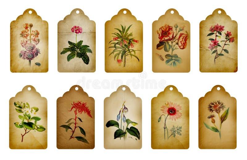 Etiquetas da flor do vintage ilustração royalty free