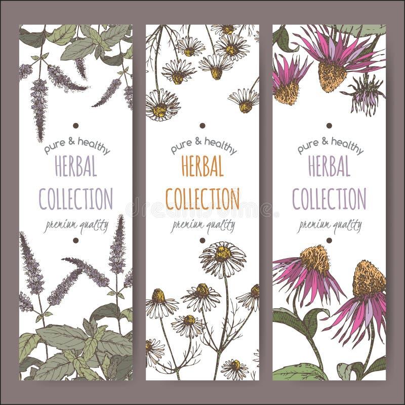 Etiquetas herbarias del vector tricolor con la hierbabuena, la manzanilla y el echinacea libre illustration