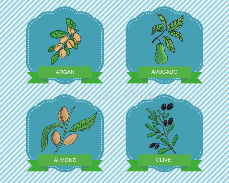 Etiquete Las Plantillas Con Las Plantas - Aceituna, Argan, Almendra ...