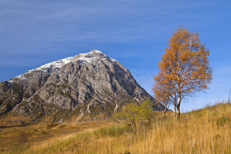 Download Etive Tree Royalty Free Stock Images - Image: 7515739