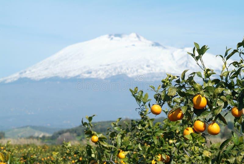 etna apelsiner royaltyfri foto